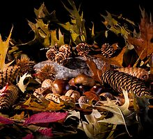Autumnal still life composition by enolabrain