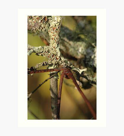 Lichen and Rust Art Print