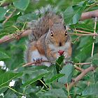 snack time by marianne troia