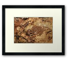 Feelin' froggy 2 Framed Print
