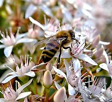Nature at Work by Steven  Agius