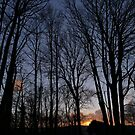 Nature's cathedral - sunset through the forest by Rivendell7