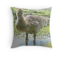 A Greylag Gosling Throw Pillow