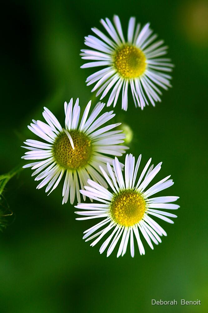 Little Wild Swamp Flowers by Deborah  Benoit