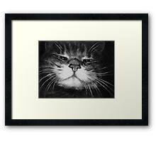 The Cat Who Walks by Himself Framed Print