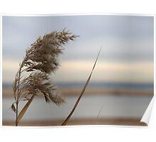 Wind Swept Poster