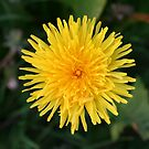 yellow by ckstatham