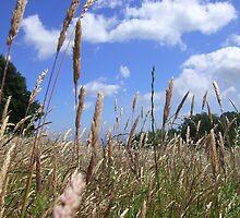 Summer Field by forestphotos