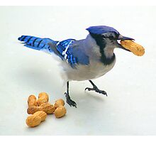 Peanut Thief Photographic Print