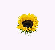 Sunflower Plant, Petals, Leaves - Yellow Green by sitnica