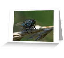 blue fly Greeting Card