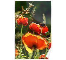 Poppies - Sunburst Poster