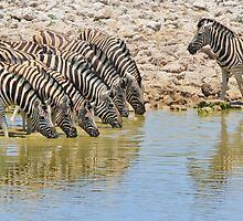Zebra - African Wildlife - Lined up for Life by LivingWild