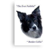 The Ever Faithful Border Collie Canvas Print