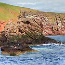 St. Abbs Rocks III by Tom Gomez