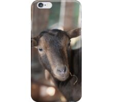 goats in the farm iPhone Case/Skin