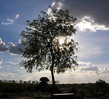 Tree and cloud by nisheedhi