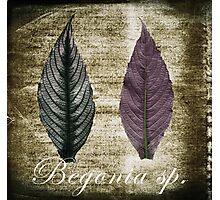 Begonia ~ collaboration Photographic Print