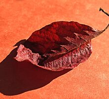 The Leaf by Eileen McVey