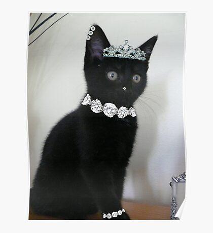 Pimp My Cat ~ ftloccontest1 Poster