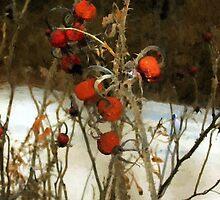 Winter Road – Williamstown by RC deWinter