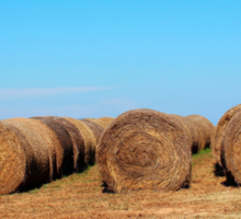 Round Bales Of Hay Sticker