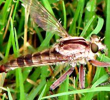 bug eyes.... by wahumom