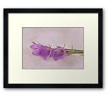 Three Wild Campanella Blossoms  Framed Print