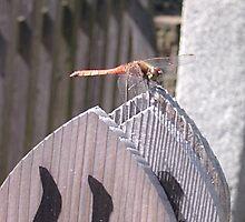Dragonfly at Sengakuji Temple, Tokyo by satsumagirl