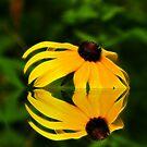 Wild Daisy by BigD