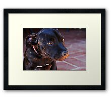 Milly #2 Framed Print