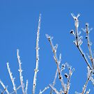 Frozen Twigs by thejessis