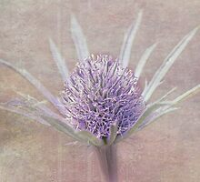 Eryngia - Lilac Texture by SusieBImages