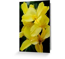 Yellow feathers Greeting Card