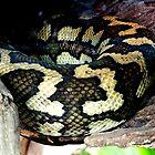 Carpet Snake, Rockhampton Australia by sandysartstudio
