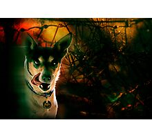 the terrier of the baskervilles Photographic Print