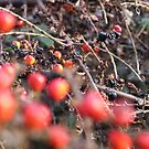 Blurred Berries by thejessis