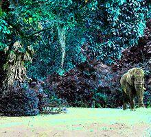 Elephant Magic by Joanna Lim