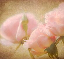 Summer Rose - Pale Pink Texture by SusieBImages