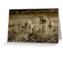 three kangaroos in sepia Greeting Card