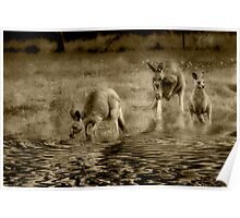 three kangaroos in sepia Poster