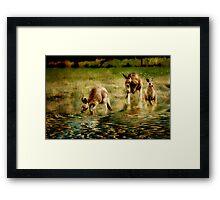 three kangaroos Framed Print