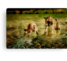 three kangaroos Canvas Print