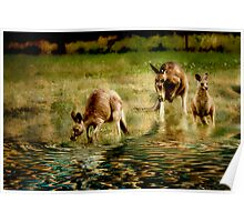 three kangaroos Poster