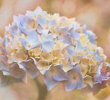 Floral Dream -  Pale BlueTexture by SusieBImages