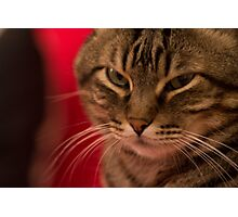 Angry cat Photographic Print