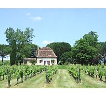 home winery Photographic Print