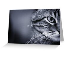 Portrait of cat in black and white Greeting Card