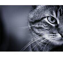 Portrait of cat in black and white Photographic Print