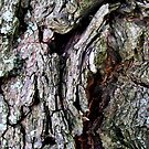 jagged bark by Jaclynn Burns